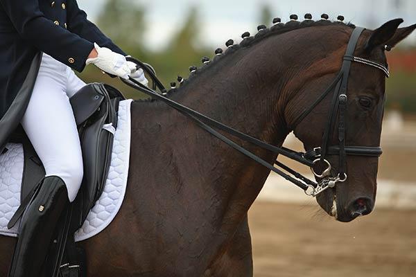 Ausbildung von Sportpferden