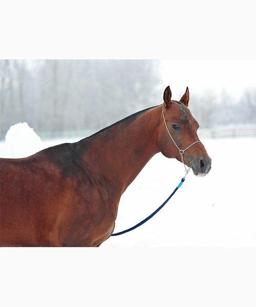 Achal Tekkiner Hamza stehend im Schnee
