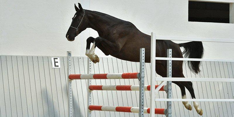 Reimers Sporthorses Stud