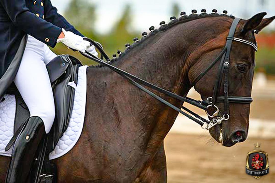Reimer Sporthorses Stud - Ausbildung